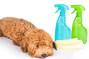 Dog Near Dangerous Toxic Products